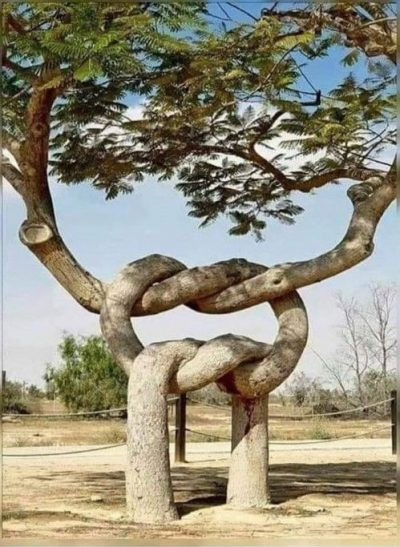 intertwined tree trunk